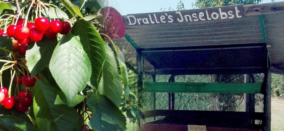 Dralles Inselobst Schanzenstraße Krautsand